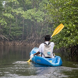 back of man alone kayaking in mangrove